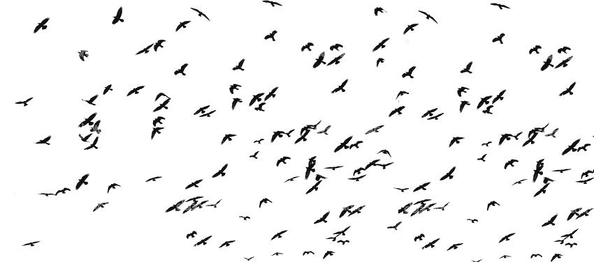 oiseaux copie2.jpg