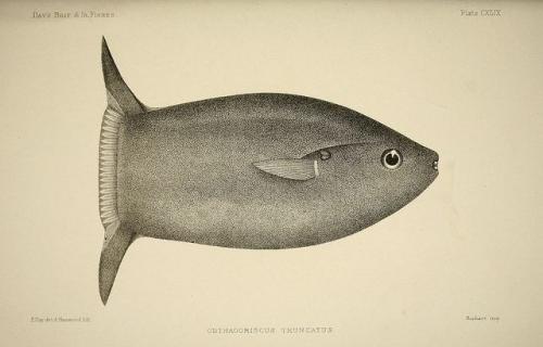 sunfish.jpg